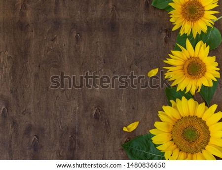 fresh beautiful sunflowers on wooden background top view