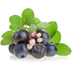 fresh berry blueberries with flowers isolated