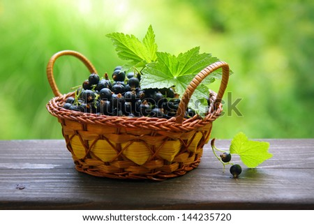 Fresh black currant in the basket