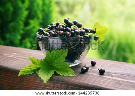 Fresh black currant in the glass bowl