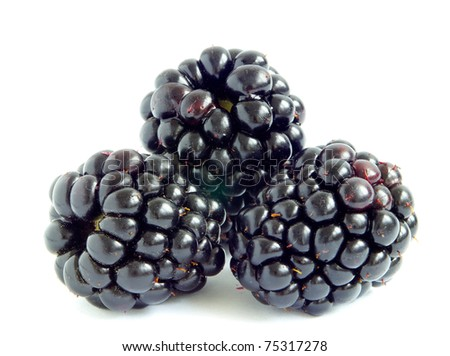 fresh blackberry isolated on a white background