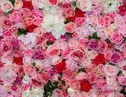 Fresh Bloom of White & Pink Floral..