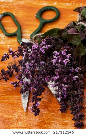 fresh,blooming bunches of herbs and spices Basil