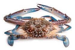 Fresh Blue Crab isolated on white background