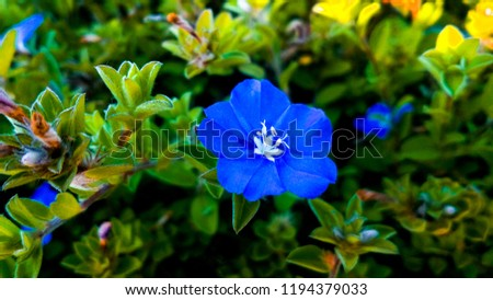 fresh blue flower. I captured this photos in morning in \