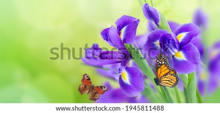 fresh blue irise flowers and butterflies over green bokeh background, web banner with copy space Photo stock ©