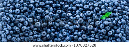 Fresh blueberries background with copy space for your text. Border design. Vegan and vegetarian concept. Macro texture of blueberry berries. Summer healthy food. Banner.