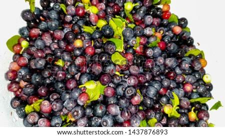 Fresh blueberries. Fresh blueberries im the close-up #1437876893