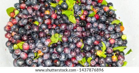 Fresh blueberries. Fresh blueberries im the close-up #1437876896