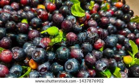 Fresh blueberries. Fresh blueberries im the close-up #1437876902