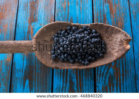 Natural Science Blueberries Illustrations
