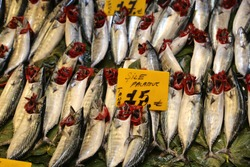 fresh bonito fishes with red gills in the fish market