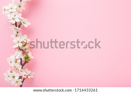 Fresh branch of white cherry blossoms on light pink background. Pastel color. Flat lay. Closeup. Empty place for inspirational text, lovely quote or positive sayings.