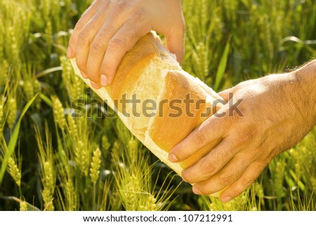 fresh bread in the hands