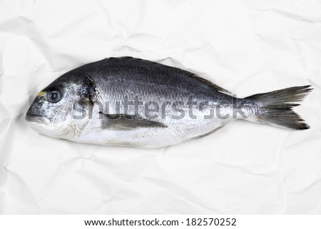 Fresh bream fish on white parchment paper, top view