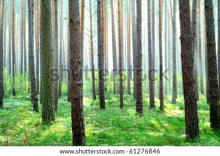 Fresh bright green forest