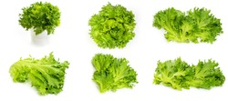 Fresh, bright, green lettuce leaves on a white background. Lettuce leaves set. High quality photo