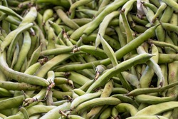 fresh broad beans in the market. Broad beans in bulk. ripe broad beans in a street market. Food background