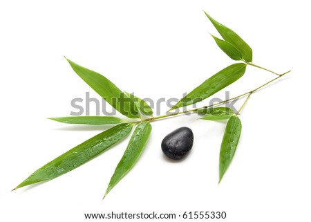 Fresh brunch of bamboo with black stone isolated on white