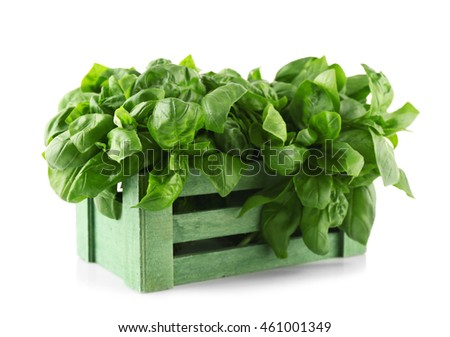Fresh bunch of basil in box, isolated on white #461001349