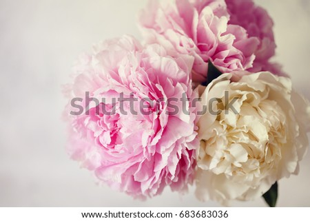 Fresh bunch of pink and white peonies peony roses flowers pastel fresh bunch of pink and white peonies peony roses flowers pastel floral wallpaper with mightylinksfo