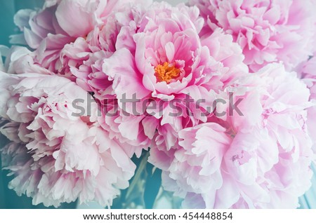 Fresh bunch of pink peonies peony roses flowers, white with blue effect shine. Pastel floral wallpaper, background from flower petals. Trendy color. Bloom love concept. Card, text place, copy space. #454448854
