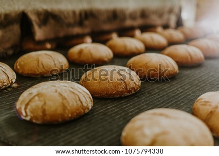 Fresh buns from the oven. Conveyor with bread. Baking bread. Workshop for production of bread. White bread in the oven. Hot buns. Confectionery