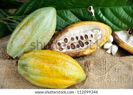 Fresh cacao fruits with leaf on texture background, selective focus.