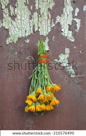 fresh calendula marigold medical herb flowers bunch on old wooden cracked farm wall