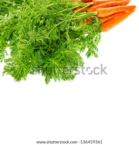 fresh carrots with green leaves isolated on white background. vegetable. food. selective focus
