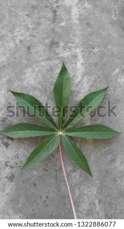 fresh cassava leaves #1322886077