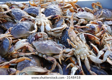 Dungeness Crab In San Francisco Contamination2013