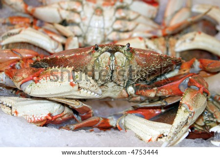 fresh caught and cooked dungenous crab for sale in seattle washingtons world famous Pike Place Market aka Farmers Market
