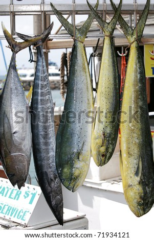 "Fresh caught fish on the hawaiian island of maui, fish include ""Rainbow Runner"" ""Yellowfin Tuna"" ""Ono"" and ""Mahi-Mahi"""
