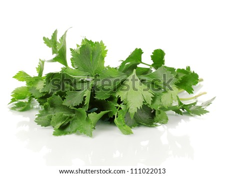 Fresh celery isolated on white