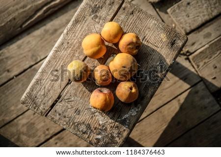 Fresh Chaenomeles from the garden Zdjęcia stock ©