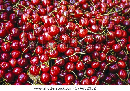 Fresh Cherries at harvest time in upstate New York
