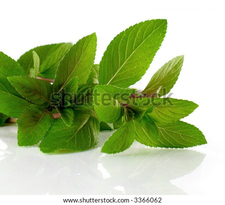Fresh Chocolate Mint leaves close up isolated with reflection