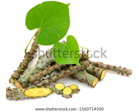 Fresh chopped Tinospora cordifolia herb or T. crispa (Heart-leaved moonseed) with green leaf isolated on white background. Medicinal properties help treat diseases and Alternative Medicine Herbal