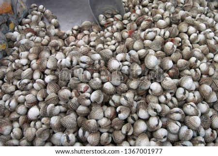 Fresh clams are offered at the market in Krabi, Thailand, Southeast Asia, Asia