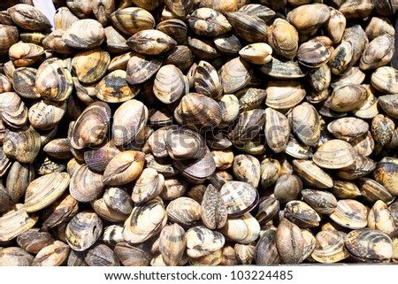 fresh clams for sale at a market