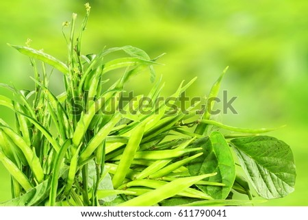 fresh cluster bean or guar sing indian vegetable in unfocus background Foto stock ©
