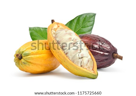 Fresh cocoa fruits with half sliced and green leaf isolated on white background with clipping path