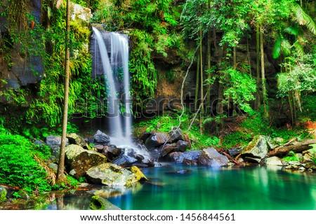 Fresh cold scenic Tamborine waterfall in Tamborine national park of Queensland, Australia. Lush wet rainforest with evergreen vegetation around clean water pool.