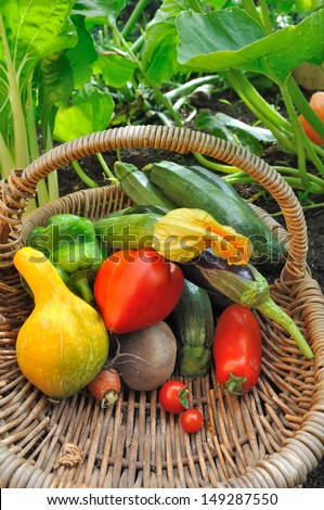 fresh colorful  vegetables in a basket in garden  - stock photo