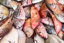 Fresh colourful exotic fish caught by fisherman and sold at the local fish market by the seaside on tropical, beautiful carribean island