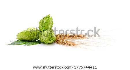 Fresh cones of hops and wheat isolated on a white background. Foto d'archivio ©