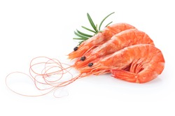 Fresh cooked shrimp isolated on white background. Seafood.