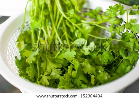 Fresh coriander in a basket for cooking