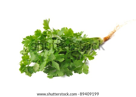 Fresh coriander or cilantro herb isolated on white background